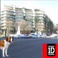 Segunda foto de la capital con un perro, concretamente un San Bernardo, coincidiendo con la parada de metro, San Bernardo