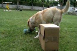 Foto: Perros de la Guardia Civil logran detectar a enfermos de narcolepsia a través del olfato (EUROPA PRESS)