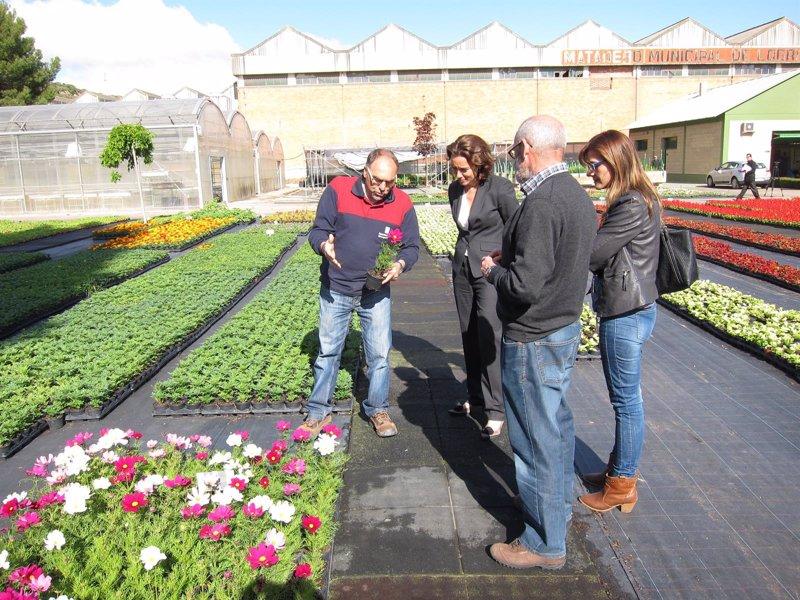 El vivero municipal produce plantas de temporada Viveros en girona