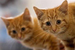 Foto: Tashirojima, la isla con más gatos por metro cuadrado (GETTY)