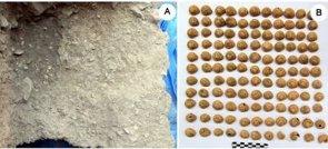 Foto: Los caracoles, presentes en la dieta paleolítica 10.000 años antes de lo que se pensaba (JAVIER FERNÁNDEZ-LÓPEZ DE PABLO)