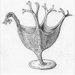Recreación artística del H. Quadriformis