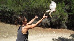 Foto: Más de 60 animales salvajes de GREFA, apadrinados en lo que va de año (GREFA)