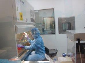 Foto: Consiguen aumentar la producción de células madre de la sangre (EUROPA PRESS)