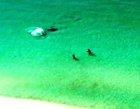 Tiburón martillo de caza a escasos metros de los bañistas