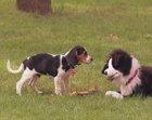 Este perro de peluche desconcierta a otros perros