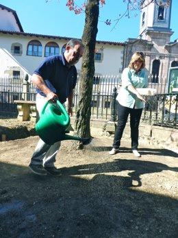 """Foto: El roble de Gernika """"está vivo"""", pero """"debilitado y prematuramente en otoño"""" (JUNTAS GENERALES DE BIZKAIA)"""