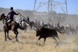 Foto: Anpba pide a la Junta ilegalizar el 'Toro de la Vega' (EUROPA PRESS)