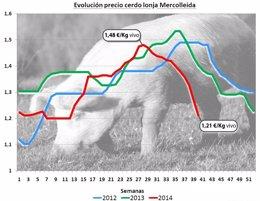 Foto: Economía.- Los precios del sector porcino registran caídas del 20% en el último trimestre, según COAG (COAG)