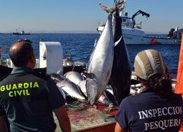 Foto: Guardia Civil e inspectores del MAGRAMA decomisan siete toneladas de atún rojo en un caladero de San Pedro (GUARDIA CIVIL)
