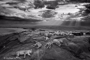 Foto: MICHAEL NICHOLS/WILDLIFE PHOTOGRAPHER OF THE YEAR
