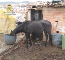 Foto: El Seprona imputa a una persona por maltrato de animales por la situación en la que tenía a dos caballos (GUARDIA CIVIL DE LA RIOJA)