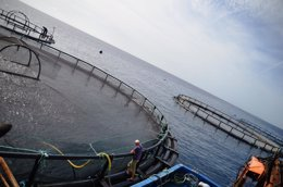 Foto: Naturally Atlántico, la primera de Europa especializada en la producción de ecolubina (CEDIDO POR LA ORGANIZACIÓN)