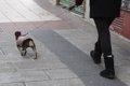 LAS TEMPERATURAS BAJAN ESTE SABADO EN LA MITAD NOROESTE PENINSULAR PRINCIPALMENTE EN AREAS DE GALICIA Y EL CANTABRICO