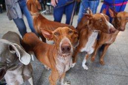 Foto: 'Un día de perros 4' incidirá en la importancia de que los propietarios cumplan la normativa vigente (CEDIDO POR AYUNTAMIENTO DE LAS PALMAS DE GRAN CANA)