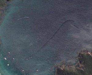 Misterioso monstruo marino en Nueva Zelanda