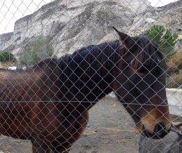 Foto: Incautados varios burros y caballos en Fonelas por maltrato animal (EUROPA PRESS/JUNTA)