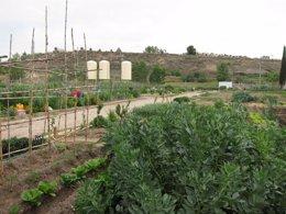 Foto: El Ayuntamiento pone a disposición de nueve entidades un huerto (EUROPA PRESS)
