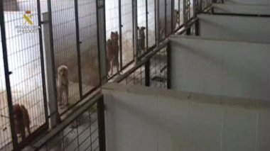 Foto: Desmantelado un criadero que vendía perros de raza con documentos falsos (EUROPA PRESS/GUARDIA CIVIL)