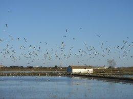 Foto: SEO/BirdLife ofrece más de 100 actividades en 32 provincias por el Día de los Humedales (JC CIRERA/  SEO/BIRDLIFE)
