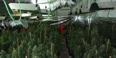 Foto: Detenido el responsable de una plantación de marihuana en Cervelló (MOSSOS D'ESQUADRA)