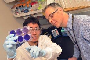 Foto: Una molécula de una hierba asiática, ¿prometedora contra el ébola? (HARRISON/TEXAS BIOMED)