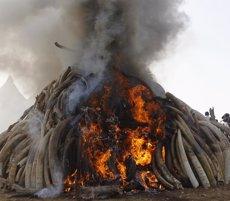 Foto: Kènia crema 15 tones d'ivori en una cerimònia contra la caça furtiva (REUTERS)