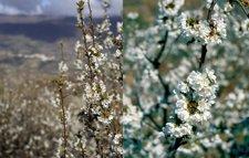 Rutas de los cerezos en flor para 2015