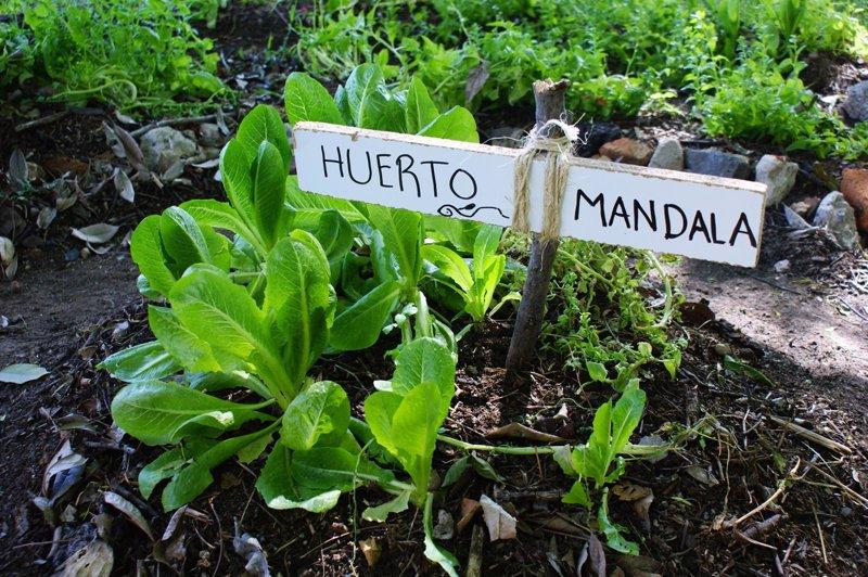 6 sencillos pasos para crear tu propio huerto urbano diy for Asociacion de plantas en el huerto