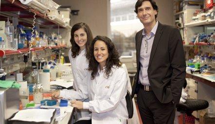 Foto: Desarrollan un fármaco contra la obesidad que también reduce la diabetes (CNIO)