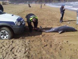 Foto: Aparece muerto un delfín en la playa de La Arena (EUROPA PRESS)
