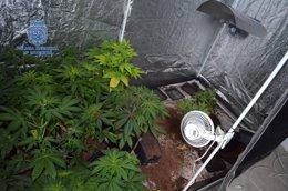 Foto: Detenidos por ocupar un inmueble y plantar marihuana (POLICÍA NACIONAL)