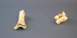 Foto: Hallan una mandíbula y un húmero de un niño neandertal en Sitges (EUROPA PRESS)