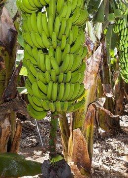 Foto: ASPROCAN reclama más protección ante la indefensión de los productores (CEDIDO POR ASPROCAN)