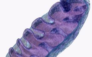Foto: Investigan una técnica para evitar la herencia de enfermedades mitocondriales (GETTY//DORLING KINDERSLEY)