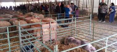 Foto: La Feria de Ganado de Valderrobres tendrá recinto empresarial y mercadillo (EUROPA PRESS)