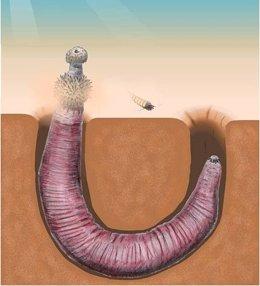 Foto: Gusanos carnívoros en forma de pene podían arrastrarse con sus dientes (UNIVERSITY OF CAMBRIDGE)