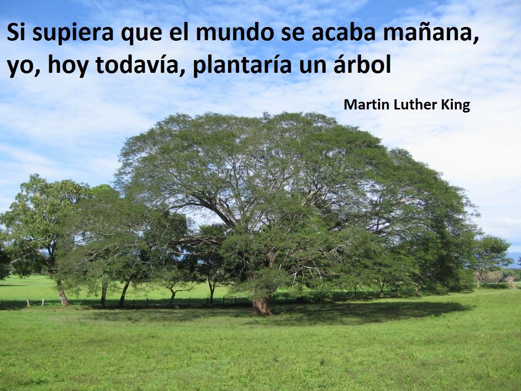 Guanacaste Tree