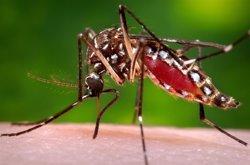 El Govern colombià confirma 5.000 casos d'embarassades afectades pel virus del Zika (ARCHIVO)