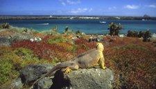 Galápagos, un reencuentro con la fauna salvaje