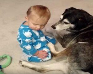 Cabezadas bebé con su perro