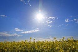 L'estrès a les plantes provoca modificacions en el seu desenvolupament (ANDREAS WIENEMANN/WIKIMEDIA)