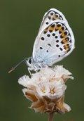 WWF suspende a siete comunidades por no cuidar su Red Natura 2000