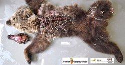 Apareixen restes d'una óssa morta a Vielha e Mijaran (Lleida) (CONSELH GENERAU D'ARAN)