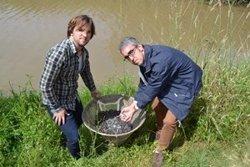 Alliberen 156.000 anguiles per repoblar els rius Llobregat, Ter i Ebre (GOVERN)
