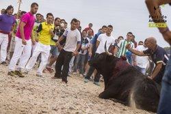 Comissions de col·legis d'advocats catalans demanen suprimir el torneig del Toro de la Vega (PACMA)