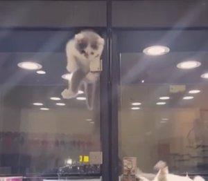 Un gato intenta escaparse de su jaula para reunirse con su amigo