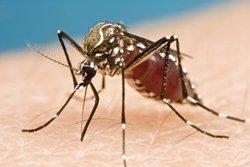 Augmenten a 237 els casos confirmats d'infecció pel virus Zika a Espanya (FLICKR)