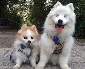 Perro ciego y perro guía