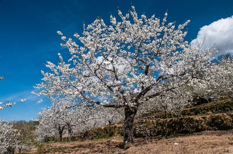 Maravillas naturales: Valle del Jerte